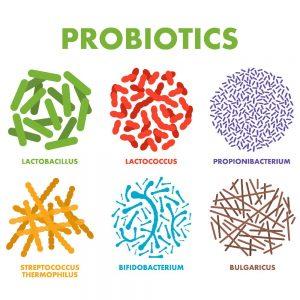 Một số chủng lợi khuẩn tốt cho hệ tiêu hóa có trong sản phẩm Probiotic 55 Billion Trace Mineral.