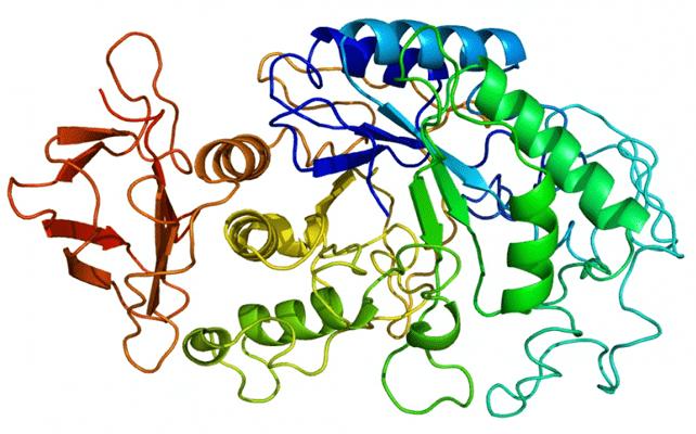Amylase có trong men tiêu hóa Enzymes 6IPmang lại nhiều lợi ích cho hệ tiêu hóa