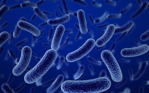 Lợi khuẩn Immune-path IP có trong men tiêu hóa 6 Enzym IP giúp kích thích hệ miễn dịch